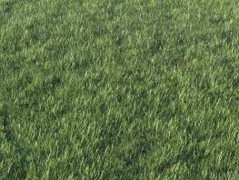fpp-lib-presets-layered-lawns-grass_base_layer_1_detail.jpg
