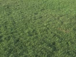 fpp-lib-presets-layered-lawns-grass_base_layer_1_large.jpg