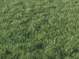 fpp-lib-presets-layered-lawns-grass_base_layer_2_detail.jpg