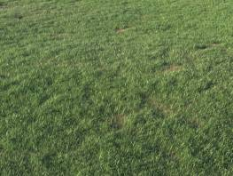 fpp-lib-presets-layered-lawns-grass_base_layer_3_large.jpg