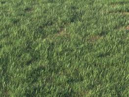 fpp-lib-presets-layered-lawns-grass_base_layer_4_detail.jpg