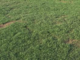 fpp-lib-presets-layered-lawns-grass_base_layer_4_large.jpg