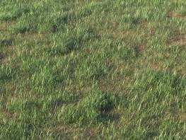 fpp-lib-presets-layered-lawns-grass_base_layer_5_detail.jpg