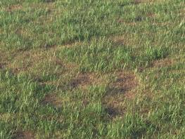 fpp-lib-presets-layered-lawns-grass_base_layer_6_detail.jpg