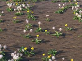fpp-lib-presets-layered-lawns-grass_overlay_layer_dandelion_mix.jpg
