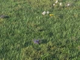 fpp-lib-presets-layered-lawns-unkempt_lawn_aio_1_detail.jpg