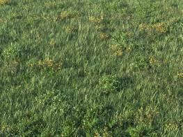 fpp-lib-presets-layered-lawns-unkempt_lawn_aio_4_detail.jpg