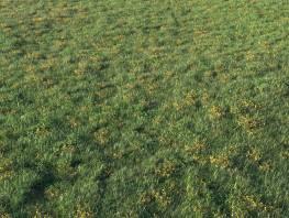 fpp-lib-presets-layered-lawns-unkempt_lawn_aio_4_large.jpg