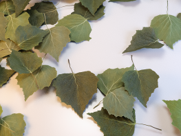 fpp-lib-presets-leaves-birch_detail.png