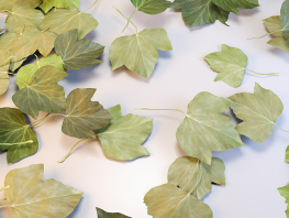 fpp-lib-presets-leaves-ivy_i_detail.png