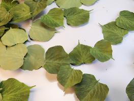 fpp-lib-presets-leaves-ivy_ii_detail.png