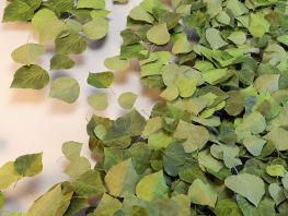 fpp-lib-presets-leaves-ivy_ii_large.png