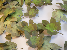 fpp-lib-presets-leaves-parthenocissus_detail.png
