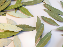 fpp-lib-presets-leaves-willow_detail.png