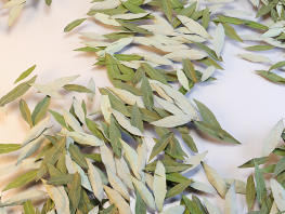 fpp-lib-presets-leaves-willow_large.png