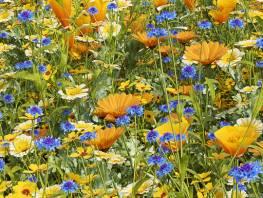 fpp-lib-presets-meadows-golden_wild_meadow_dense_detail.jpg