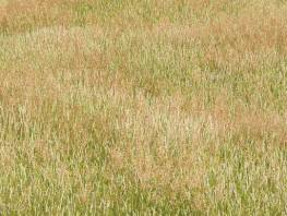 fpp-lib-presets-meadows-meadow_grass_1_large.jpg