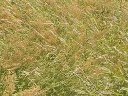 fpp-lib-presets-meadows-meadow_grass_1_windswept_detail.jpg