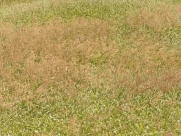 fpp-lib-presets-meadows-meadow_grass_1_windswept_large.jpg