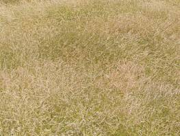 fpp-lib-presets-meadows-red_fescue_windswept_large.jpg