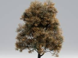 fpp-lib-starter-library-black_poplar_early_fall_1.jpg