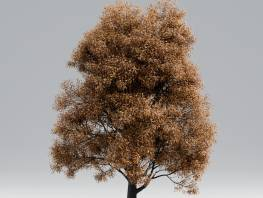 fpp-lib-starter-library-black_poplar_late_fall_1.jpg
