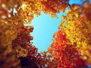 HD Trees 4