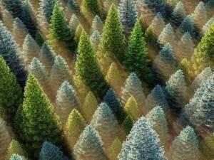 HD Trees 5&6