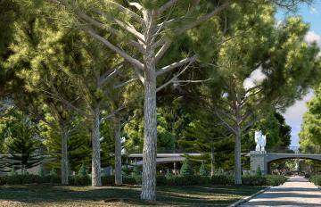 New Mediterranean Pine Trees Collection