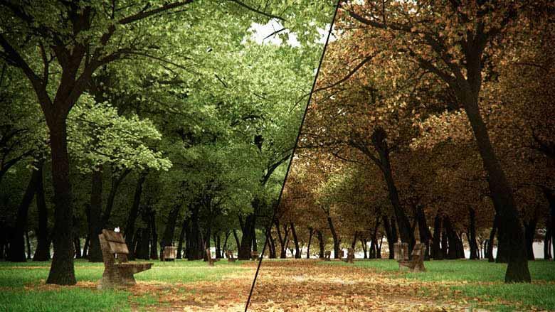 Autumn Park-ForestColour.jpg