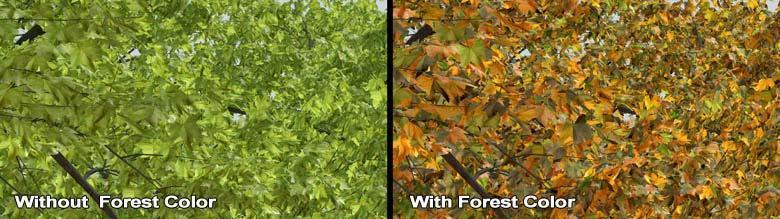Autumn Park-LeavesBA.jpg