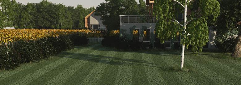 Lawn and ivy-