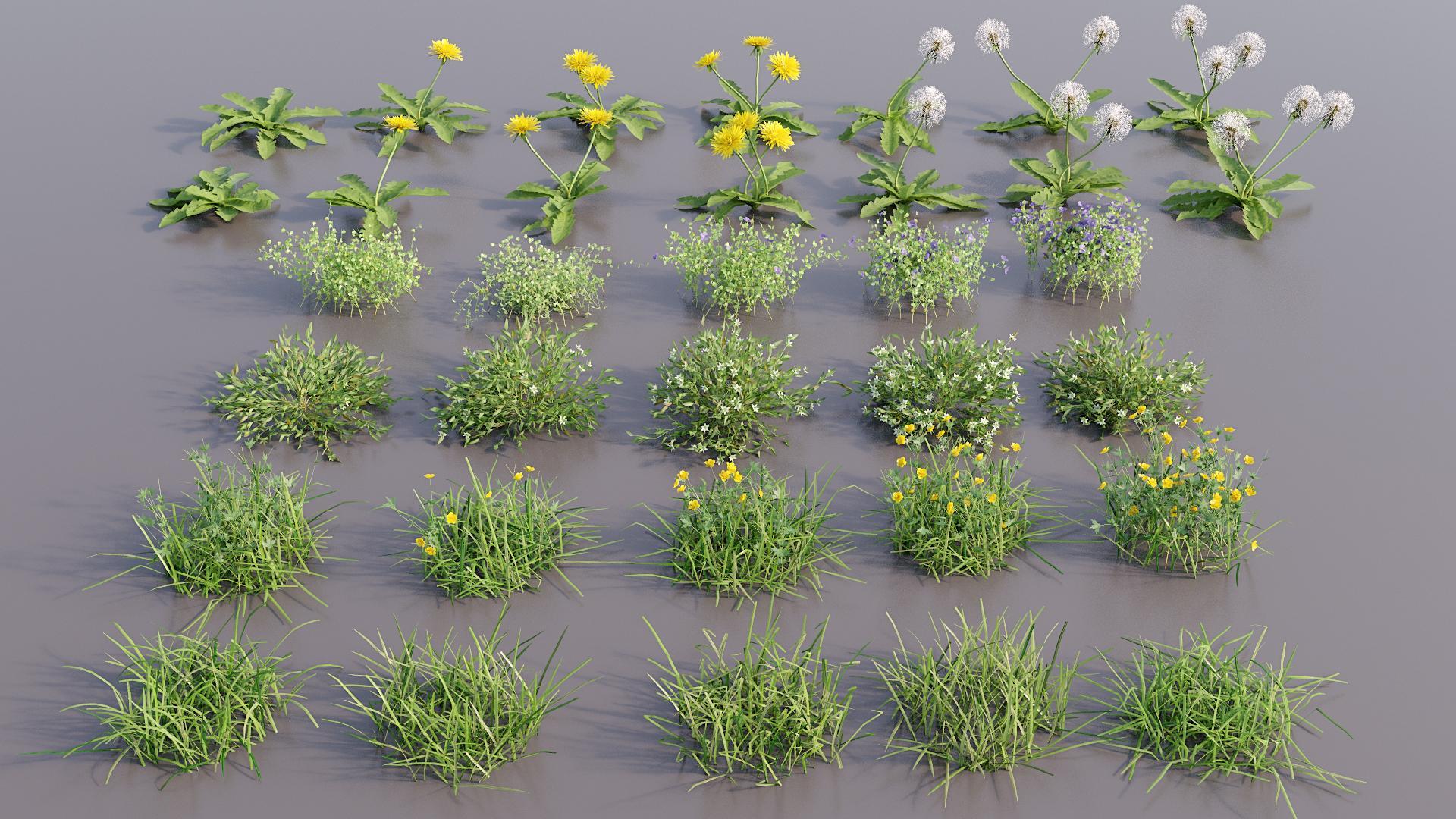 Creating Libraries-plants.jpg